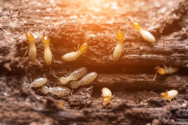 Cold Formed Steel Termite proof.jpg